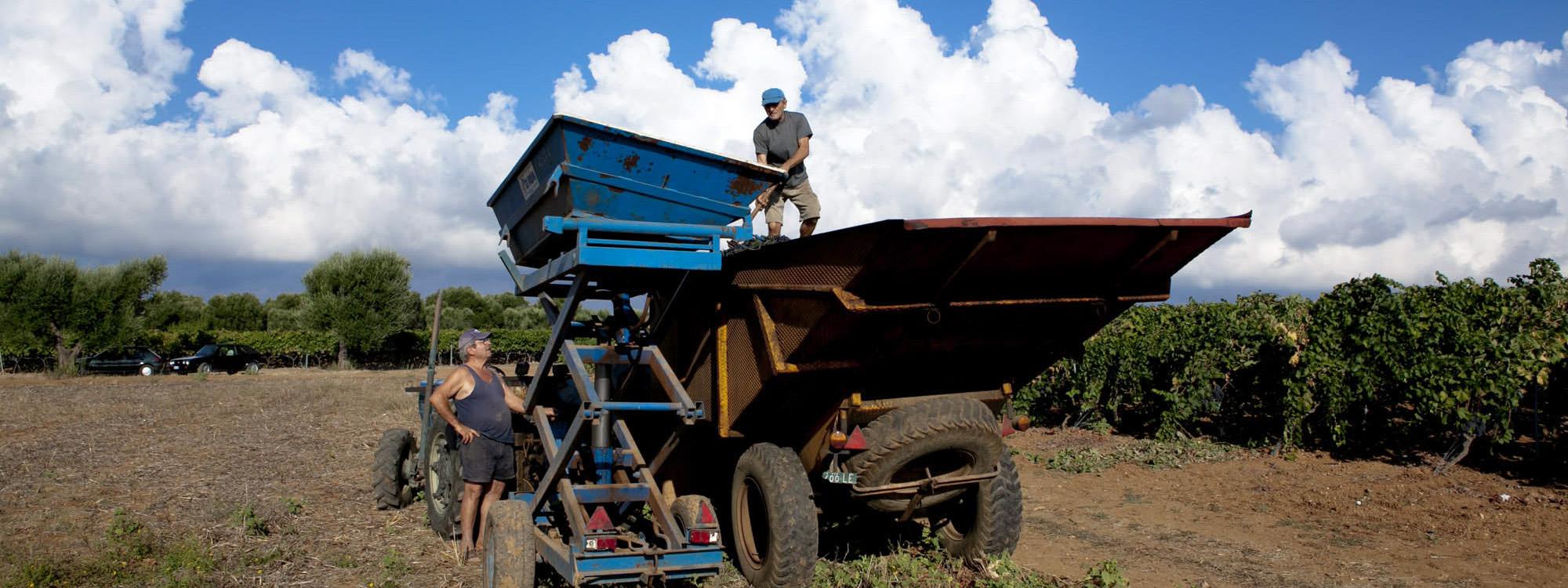 azienda agricola Tenuta Yala